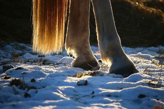 Pferdebein ohne Mauke