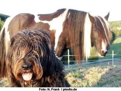 Pferd und Hund - mit etwas Vorbereitung ein tolles Team