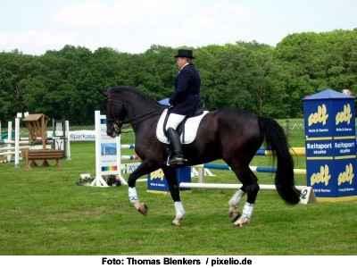 korrekt angelehntes Pferd