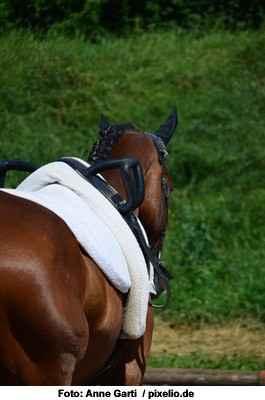 Fellglanz beim Pferd