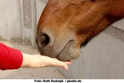 Führungskräfteseminar mit Pferden als Trainer