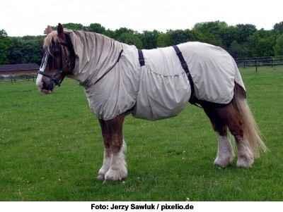 Sommerekzem-Fliegendecke Pferd