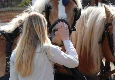 Pferde vertrauen uns - im Gegenzug sollten wir bestmöglich für sie sorgen. Foto: Lupo / pixelio.de