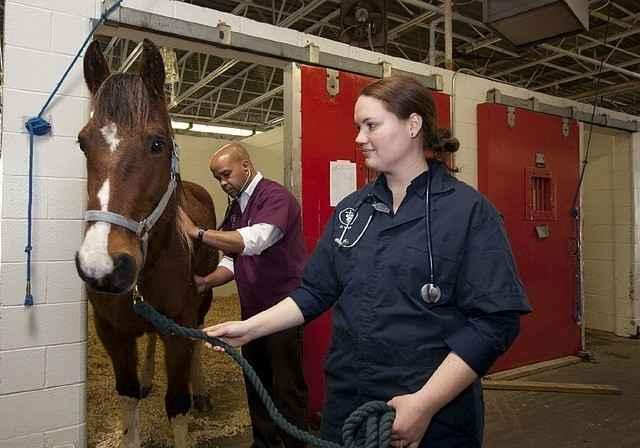 Tierarzt beim Abhören