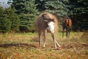 Pferdegedicht Schmutzpferd
