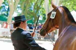 Gut trainierte Pferde muss man mit der Gerte nicht mal berühren, sie verstehen und achten auf jeden Wink. Nicht aus Angst, sondern aus Verständnis. Genau so gut könnte man in diesem Beispiel den Finger heben...