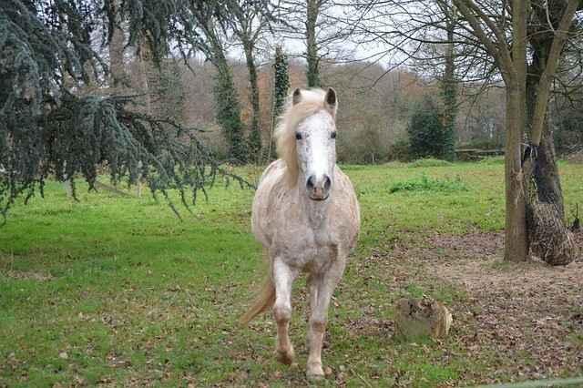 Pferd im Aktivstall