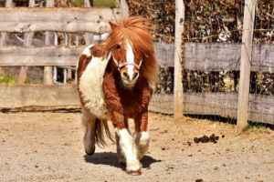 Pony mit Winterfell