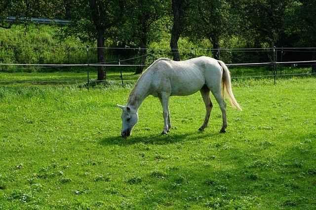 Pferd auf Koppel - besser mit Überwachungskamera