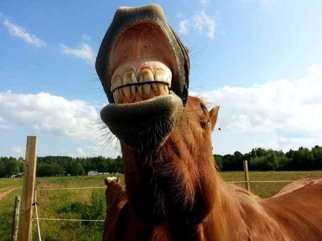 Zum Lachen oder auch nicht - pöbelnde Passanten auf der Suche nach Streit mit Reitern