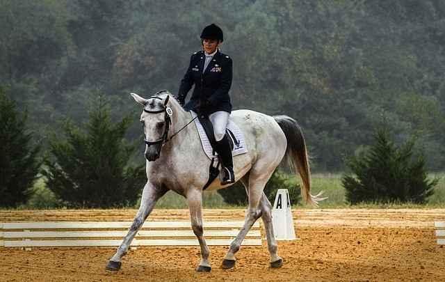 Gebogen und gestellt - Pferd in korrekter Haltung auf gebogener Linie (kommt einbisschen auf die Vorderhand, kann aber auch am Bild liegen)