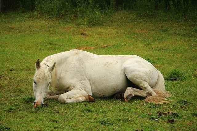 krankes pferd pferdekrankenversicherung