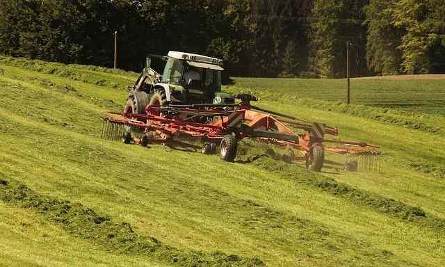Gras - die Vorstufe vom Heu