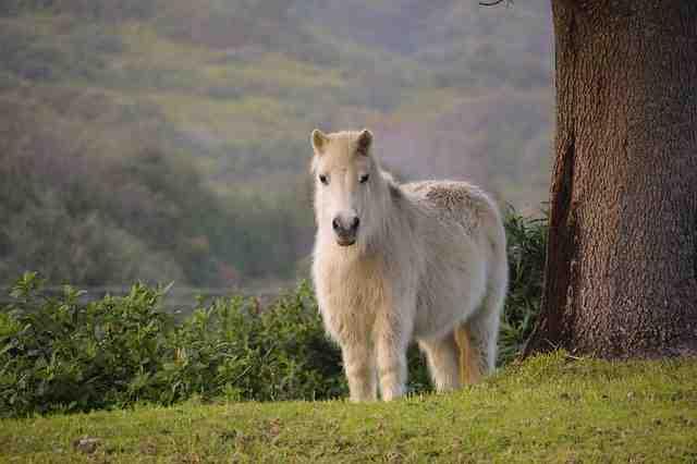 Pferd mit Winterfell - Haare über Haare